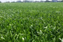 人工芝の選び方(その①)「人工芝の材質」という視点での比較です。