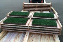 サッカースタジアムのフィールド芝生改修に向けた「厚切りソッド」のご提案