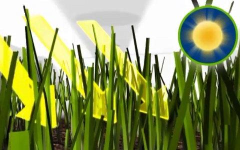 テラプラスの芝生保護材の仕組みについて